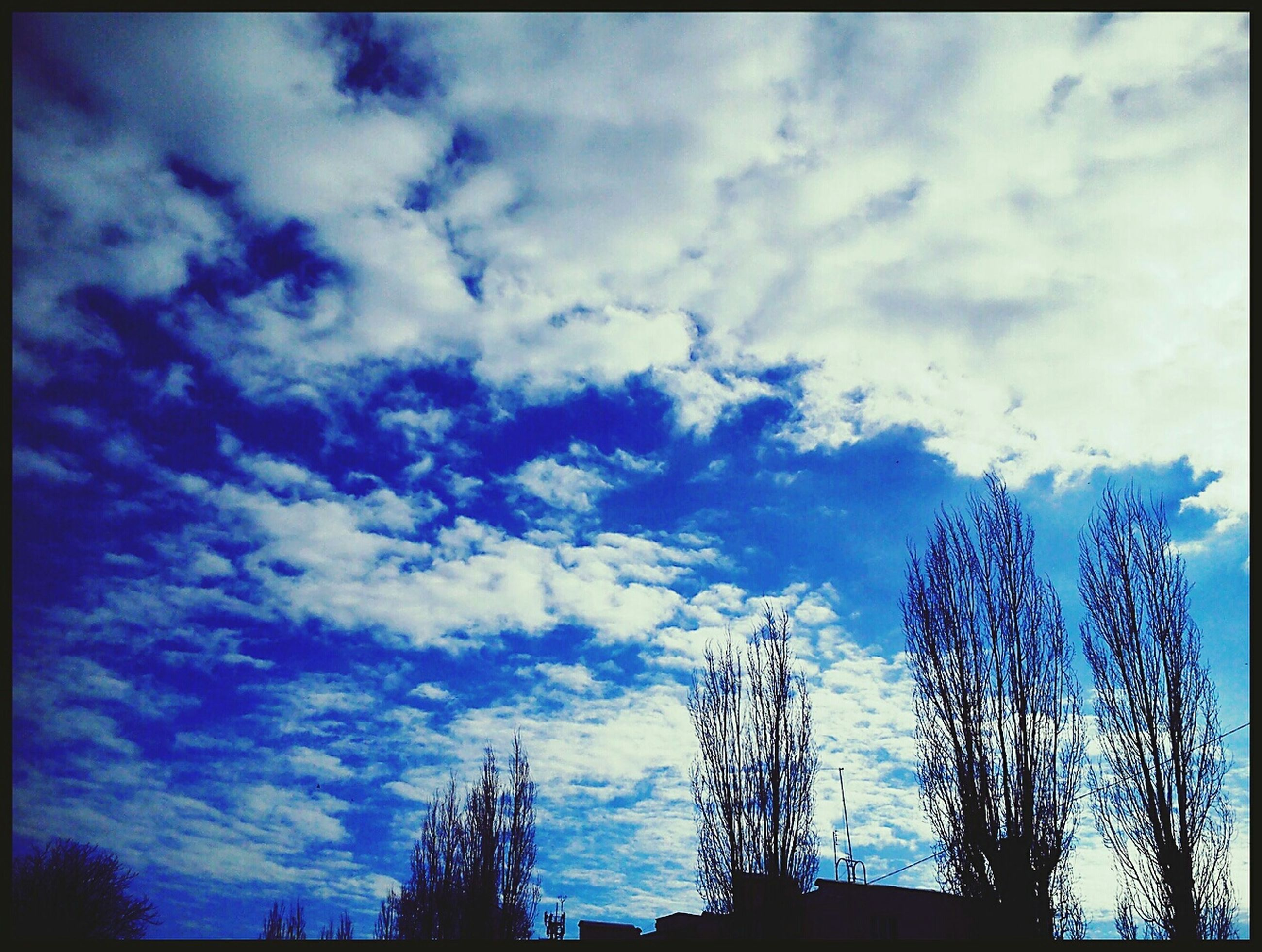sky, transfer print, low angle view, silhouette, cloud - sky, auto post production filter, blue, cloud, cloudy, beauty in nature, tree, nature, tranquility, scenics, sunset, outdoors, tranquil scene, dusk, no people, growth