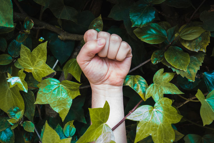 Power Yes Body Part Clenched Fist Finger Fist Gesture Green Color Growth Hand Handsome Human Body Part Human Finger Human Hand Human Limb Leaf Leaves Lifestyles Nature One Person Outdoors Plant Plant Part
