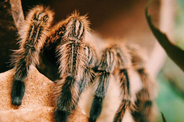 Close-up Spider