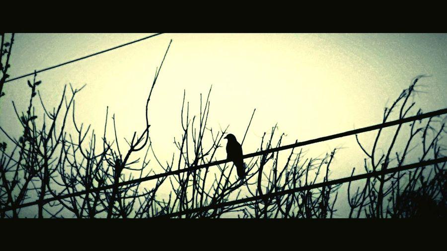 EyeEmNewHere EyeEm Selects White Winged Dove Quiet The Week On EyeEm