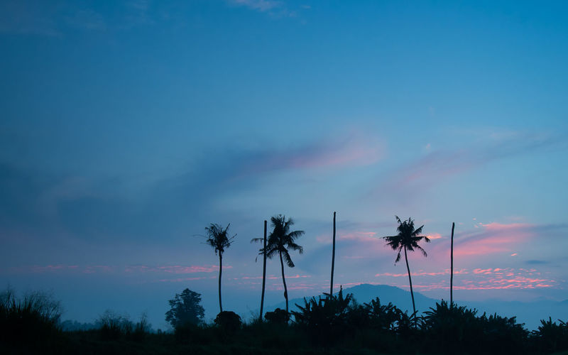 Beauty In Nature Cloud - Sky Coconut Palm Tree Environment Growth Idyllic Low Angle View Nature No People Non-urban Scene Outdoors Palm Tree Plant Romantic Sky Scenics - Nature Silhouette Sky Sunset Tranquil Scene Tranquility Tree Tropical Climate