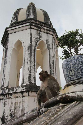 Animal Themes Architecture Hua Hin Monkey Patrol  Primate Watcher Wildlife