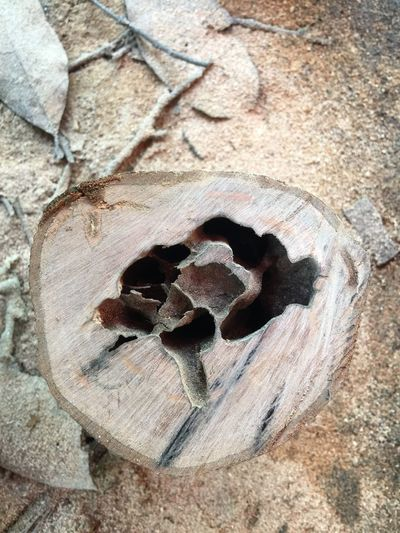 Cross cut honey bee brunch Stinkles Bee Honey Bee Kelulut No People Close-up Day High Angle View Nature Textured  Land Rough Solid Sunlight Outdoors Directly Above Pattern Heart Shape Positive Emotion Sand