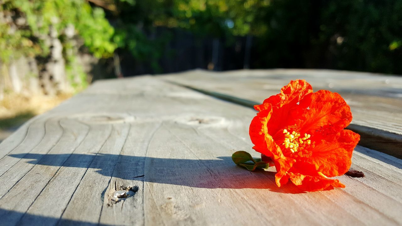 flower, nature, petal, freshness, flower head, sunlight, plant, no people, table, outdoors, wood - material, day, shadow, red, fragility, beauty in nature, healthy eating, close-up, hibiscus