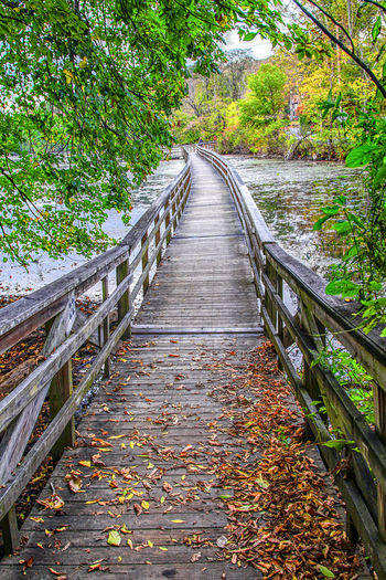 Long wooden walkway surrounded by autumn colors. Trails Autumn Beauty In Nature Foliage Footbridge Forest Hike Leaf Leaves Nature No People Outdoors Railing Scenics The Way Forward Tranquility Tree Walkway Water Wooden Path