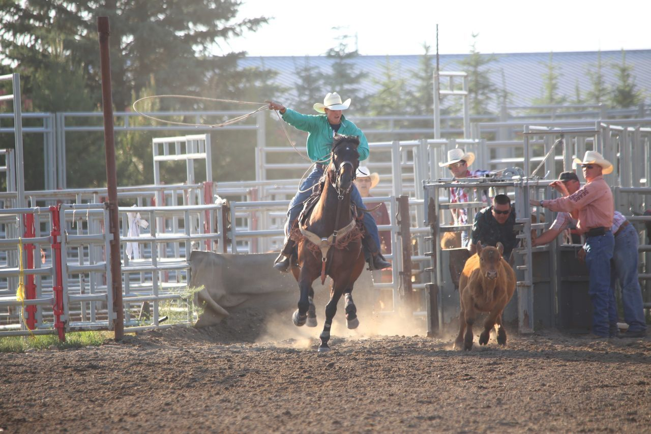 livestock, domestic animals, horse, riding, horseback riding, cowboy, adult, outdoors, agriculture, togetherness, day, men, full length, two people, only men, people, mammal, sport, helmet, real people, working, competition, headwear, adults only