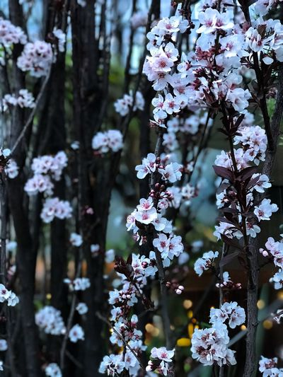 Fragility Freshness Blossom Nature No People Close-up Outdoors