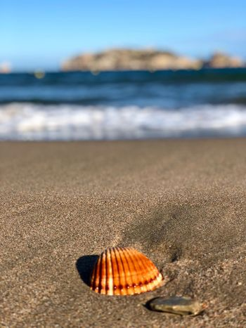 Beach Land Sea Sand Water Shell Beauty In Nature