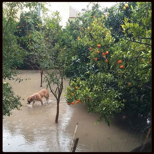 Turkey Rain Day Dog Orange Tree