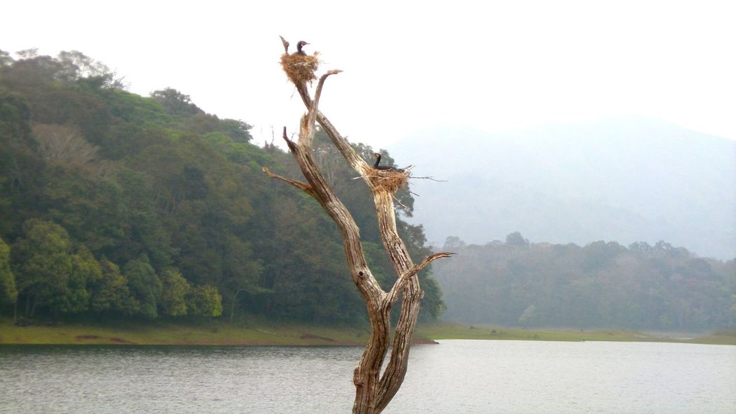 Animal Wildlife Nature Lake Outdoors Mountain Animals In The Wild Sky Beauty In Nature Bird Thekkadi Kerala, India