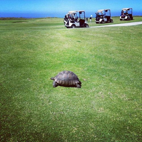 The things you see on a golf course Golf Southafrica Oubaai