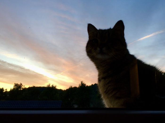 Domestic Cat Sunset Sky Domestic Animals Cloud - Sky Silhouette Nature Animal Themes Curiosity Outdoors Window Cuteness