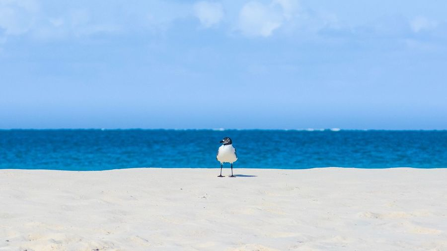 Sea Water Beach Land Sky Horizon Over Water Sand Beauty In Nature Horizon Scenics - Nature Nature Blue Tranquility Animal Animal Themes Bird Day Animal Wildlife No People Tranquil Scene
