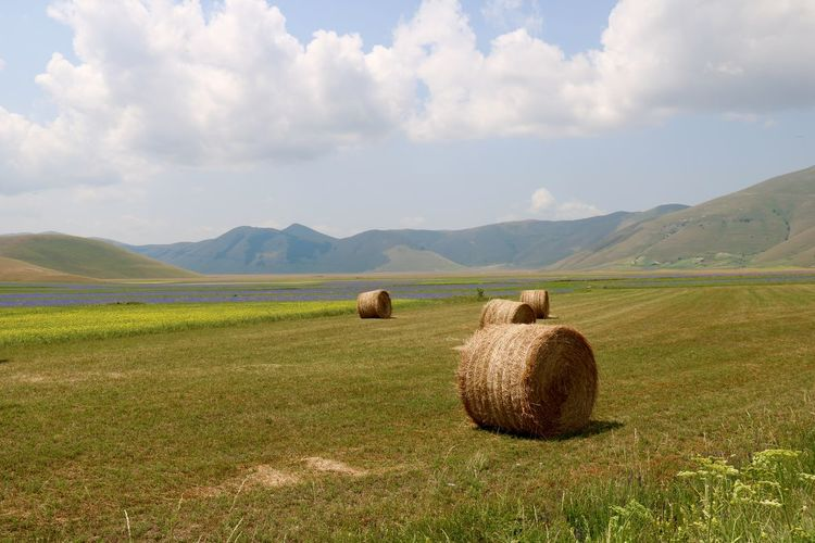 Piano grance Castelluccio Agriculture Bale  Day Field Harvesting Landscape Meadow Outdoors