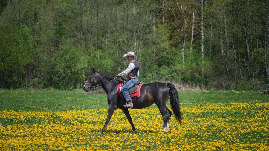Cowboy Minsk Minsk,Belarus Portrait DenisBurmakin Takumar 135mm F2.5 Portrait Photography portrait of a friend Full Frame PENTAX K-1 Cowboy Horse Horse Photography  EyeEmNewHere