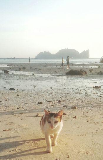 Beach Life Beach Island Koh Phi Phi Island Koh Phi Phi Cats Cat Beach Animals Cat Walking Thailand People And Places