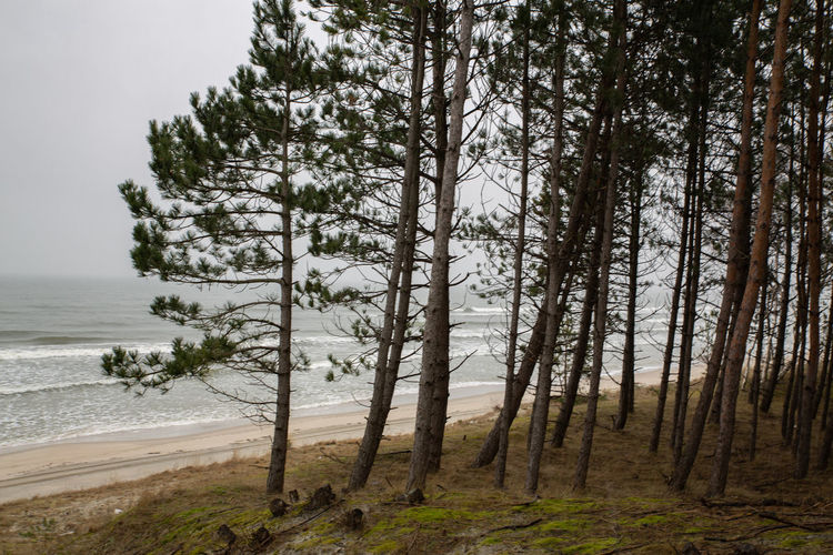 Trees on beach against sky in forest