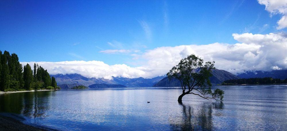 Tree Water Mountain Lake Sky