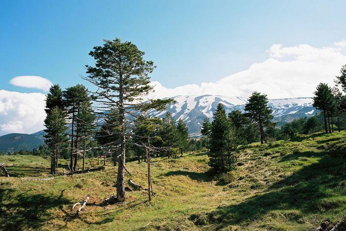 { Film } Mount Etna, North / Fuji GSW690II, Kodak Portra 160 +1.5 Film Filmisnotdead Fujifilm Kodak