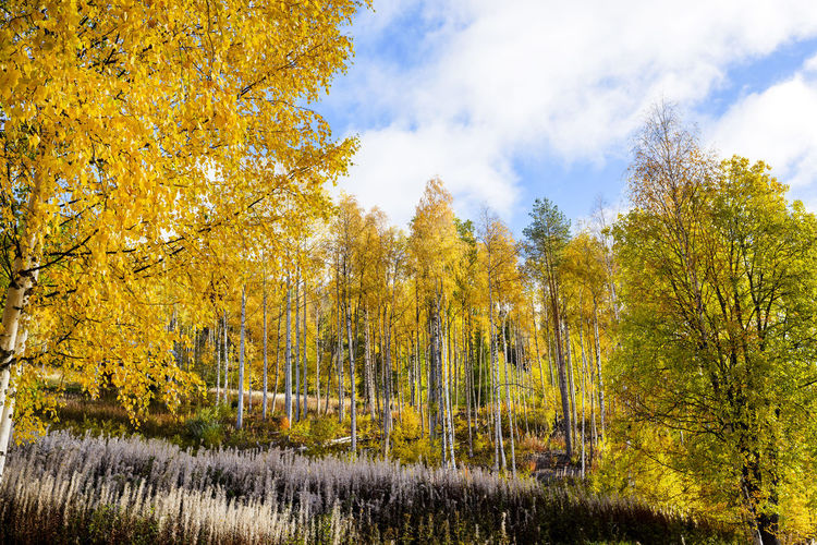 Magic_forest