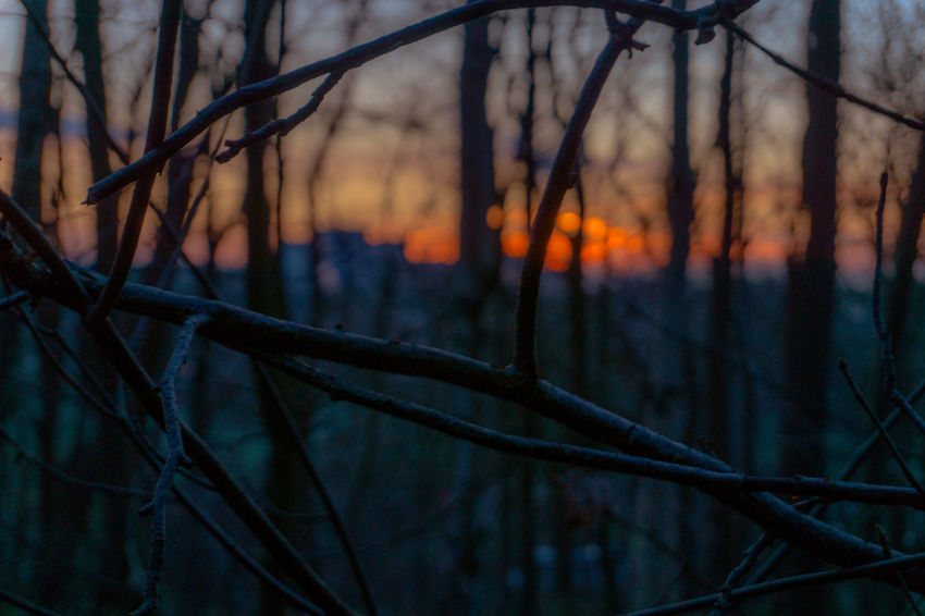 Beauty In Nature Branch Close-up Day Focus On Foreground Forest Nature No People Outdoors Sunset Tree EyeEm Ready