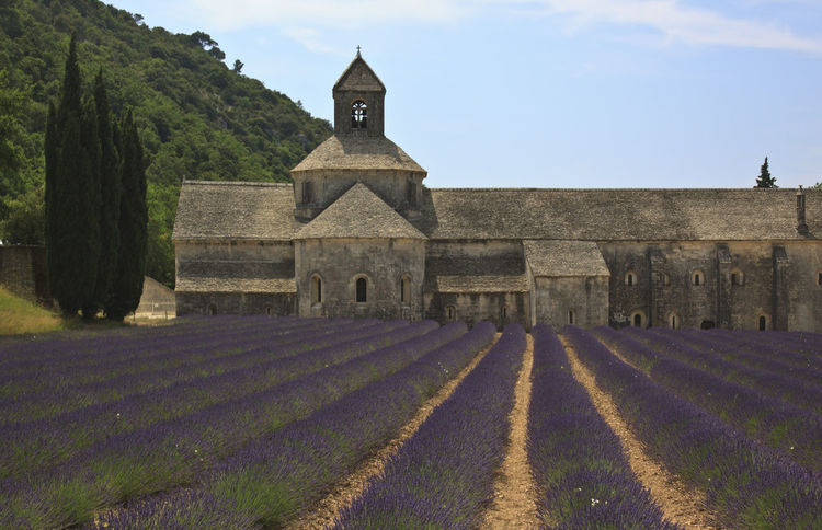 Senanque Abbey with Lavender Architecture Building Exterior Built Structure Church Cloud - Sky Day Europe Façade Flowers Footpath France Hedge Historic Landscape Lavander No People Outdoors Place Of Worship Provence Senanque Sky Sun The Way Forward Tranquil Scene Valensole