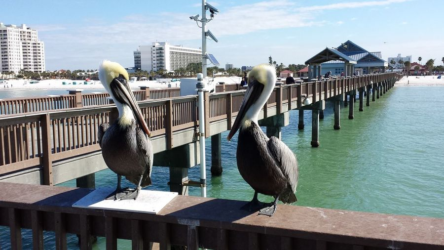 Pelicans perching on railing by sea