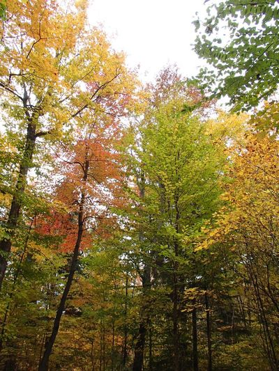 Couleurs d'automne - Fall Foliage Fall Colors Foliage Tree Plant Growth Beauty In Nature Nature Low Angle View No People Forest Scenics - Nature