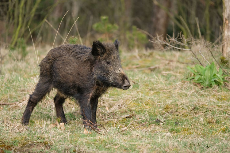 Side view of an animal on field
