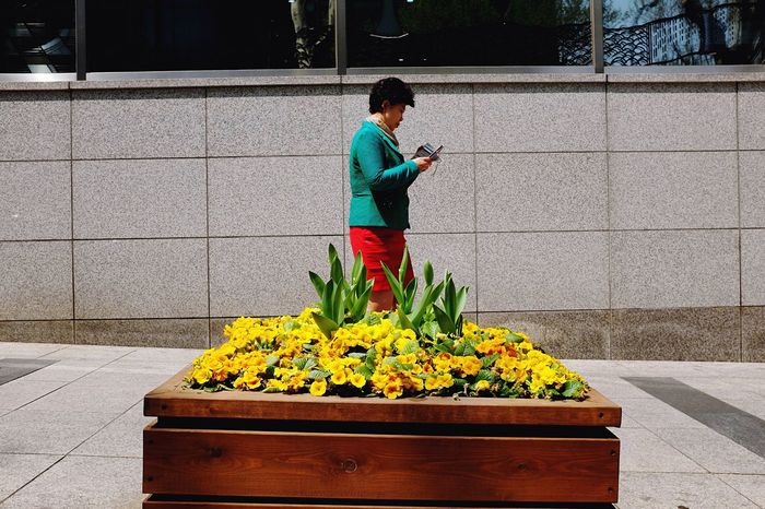 <Street flower> Yeoksam-dong, Seoul / 2015 Street Photography Streetphoto_color EyeEm In Seoul EyeEm Korea Open Edit Flowers