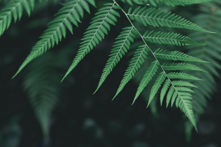 Beauty In Nature Close-up Coniferous Tree Day Fern Fir Tree Focus On Foreground Fragility Freshness Green Color Growth Leaf Leaves Natural Pattern Nature No People Outdoors Pattern Plant Plant Part Selective Focus Tranquility Vulnerability