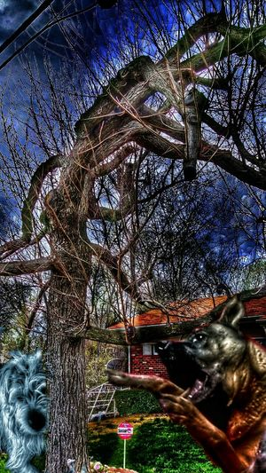 https://youtu.be/qjsvMrkEw4k The K9GB Home Security There Goes The Neighborhood Who's Afraid Of The Big, Bad Wolf? Silly Goose Little Piggy TreePorn Sky And Trees Calm Before The Storm Nature_collection Light And Shadow Untold Stories Larger Than LifeMy Dogs Are Cooler Than Your Kids
