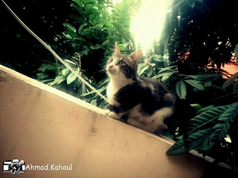 Capture The Moment my Cat back in Lebanon