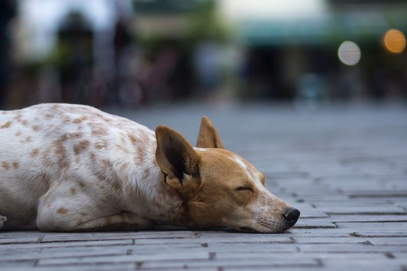 Dog sleeping on ground