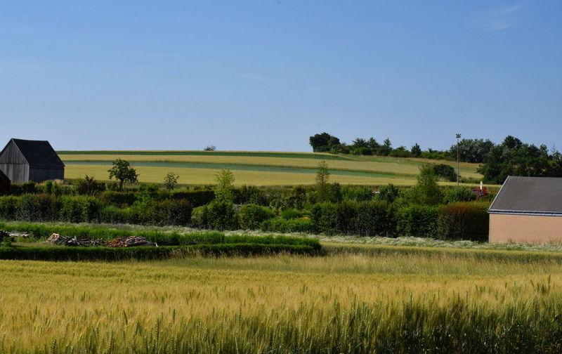 Farm in Lower