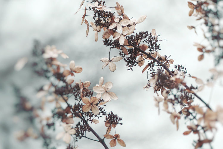 Close-Up Of Flowers Growing On Branches During Winter