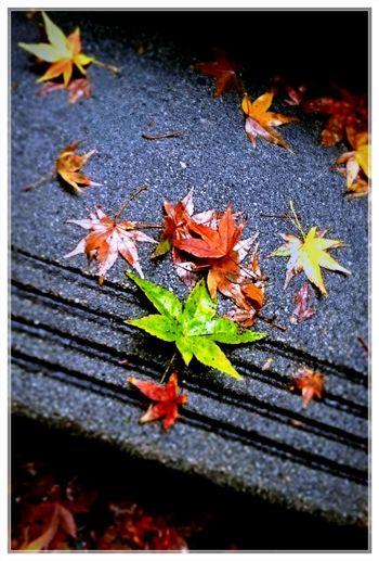 Autumn Colors Autumn Leaves