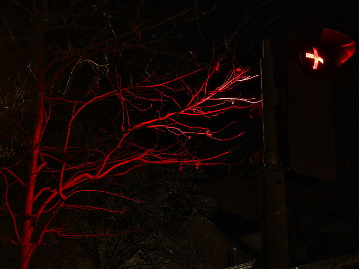 Low angle view of illuminated bare tree at night