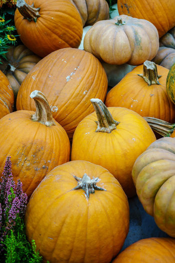 Various type of pumpkin Abundance Autumn Close-up Day Food Food And Drink For Sale Freshness Gourd Halloween Healthy Eating Market No People Outdoors Pumpkin Squash - Vegetable Vegetable