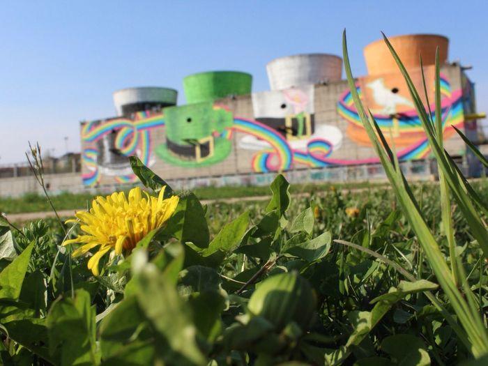 Street art Factory. Factory NevermindRecords Street Streetphotography Street Art Park Parco Dora Torino Turin Italy