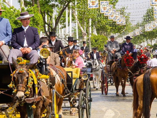 Feria de Abril de Sevilla Andalucía Outdoors Horses Caballos Andalusia Seville Tradiciones Street Photography Sevilla Fotocallejera