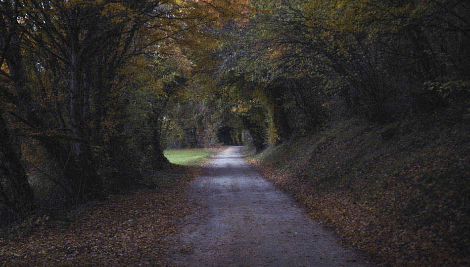 country road Countryside Automn Autumn Trees Forest Nature Nature Photography Landscape Countryside Outdoors Eye4photography  EyeEm Best Shots Tree Road