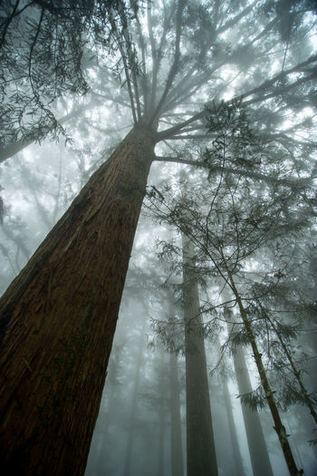 Beauty In Nature Growth Landscape Low Angle View Nature No People Tree Tree Trunk Wood - Material
