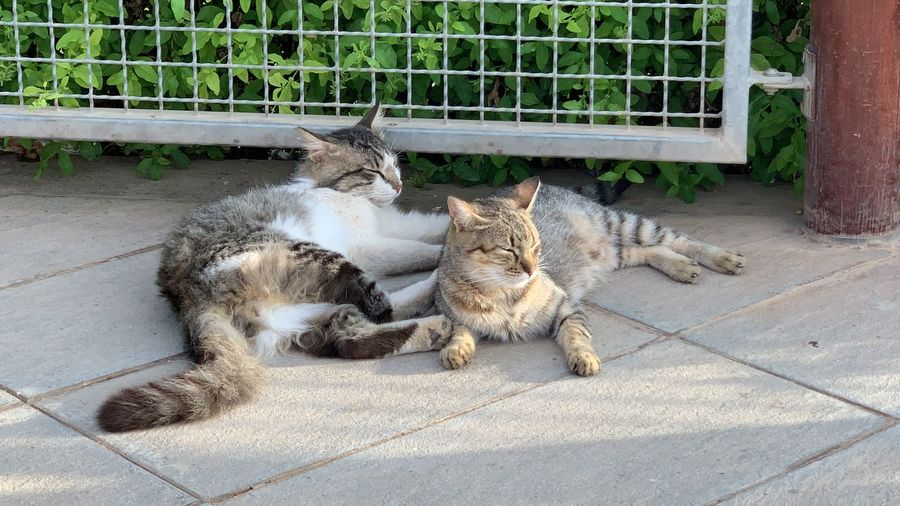 Cats relaxing on footpath