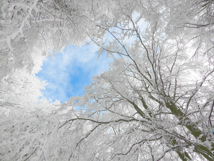 Frost Winter Woods Frozen Forest Frozen Forest Beauty Frozen Nature Frozen Trees Frozen Woods Rime.
