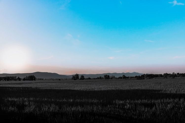 Everything. Rural Scene Agriculture Cereal Plant Field Sunlight Crop  Farm Sky Landscape