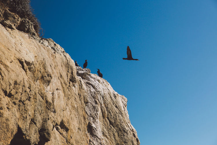 Low angle view of birds perching on cliff against clear blue sky