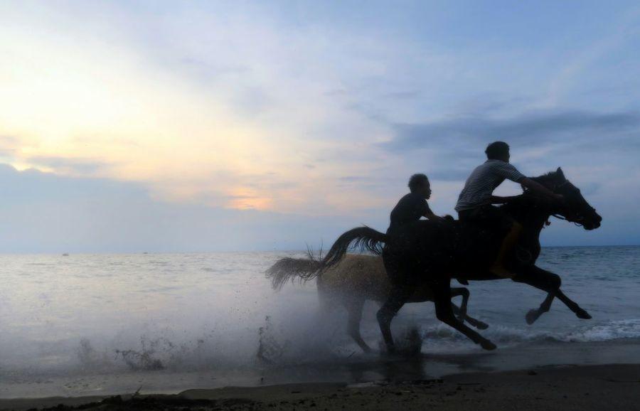 Horse Riding Horse Photography  EyeEm Indonesia MyPhotography Lombok Island Lombok Photo Works Canonphotography CanonpowershotG7X Silhoutte Photography Silhouette_collection Indonesia_photography EyeEmNewHere EyeEm Gallery Lombok Gallery Power In Nature Indonesia_allshot