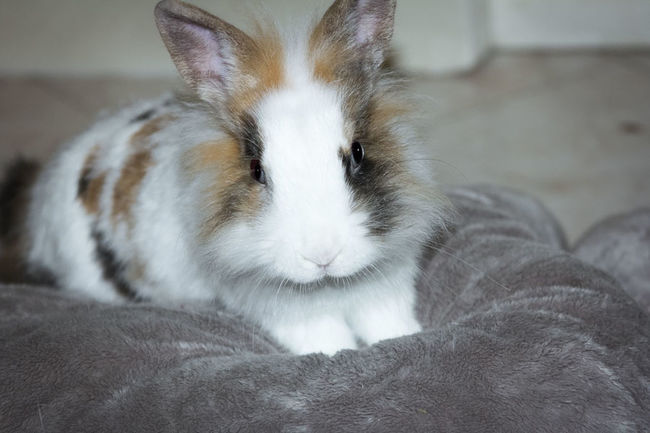 ° MyBunny° Animals Bunny  Mybunny Photographer Photographic Memory Photography Photoshoot Sweet