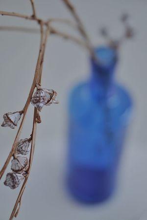 Blue Hanging Sport Close-up